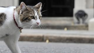 Kater Larry bleibt in Downing Street No. 10