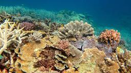 Gesunde Korallen im Great Barrier Reef