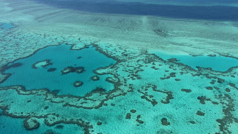 Korallenbleiche am Great Barrier Reef | Bildquelle: AFP