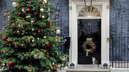 Kater Larry vor Downing Street No. 10